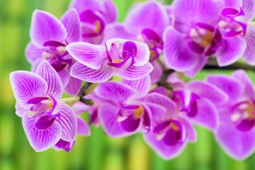 Orchidee im Detail und Bambus