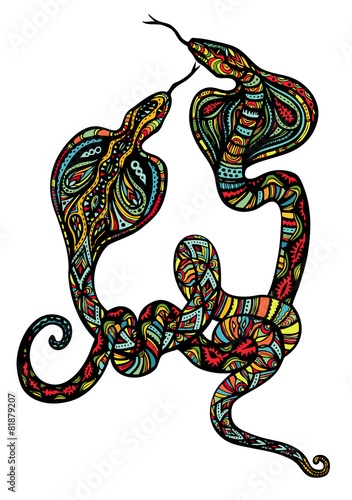 Two Ornate Snakes - 81879207