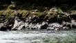 North Fork American River Colfax California
