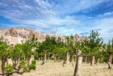 Vineyard and mountain landscape, Cappadocia, Turkey