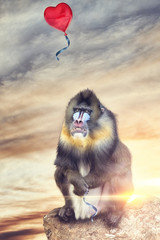 baboon looking like a balloon escapes with heart shape