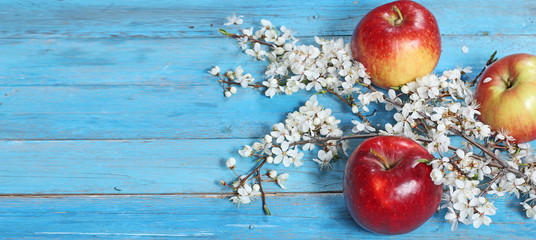apple flowers and ripe red apples on blue wooden background