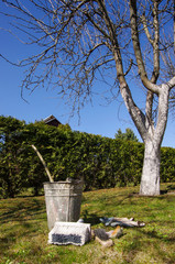 Early spring gardening work tree whitening and whitewash