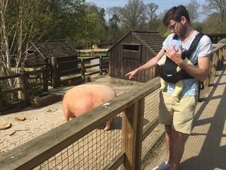 Look at the pig!