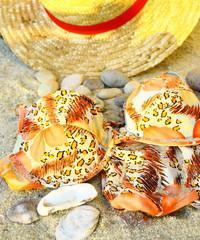 maillot de bain,galets et chapeau sur le sable