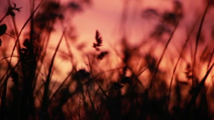 Sunrise on a meadow