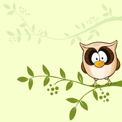 vector design with cute owl
