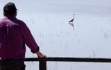 Mature man birdwatching poster