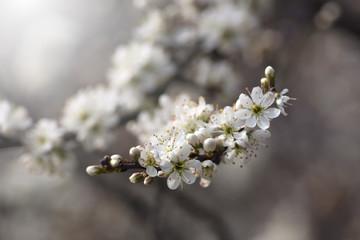 Beautiful white flowers on the bush