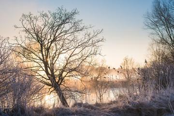 Sonnenaufgang an den Regnitzwiesen