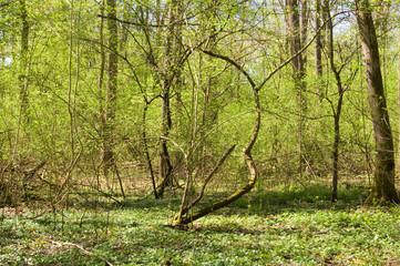 Frühlings Wald