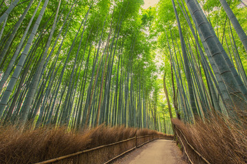 Bamboo Forest in Kyoto, Japan © SANCHAI
