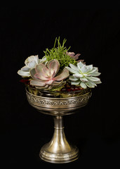 succulent flowers in a silver cup, by Charismatique