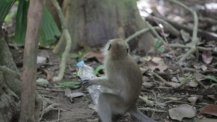 Monkey play with plastic bottle