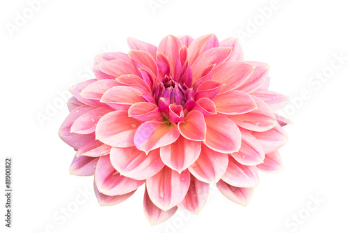 Fotobehang Dahlia Dahlia flower isolated on white background
