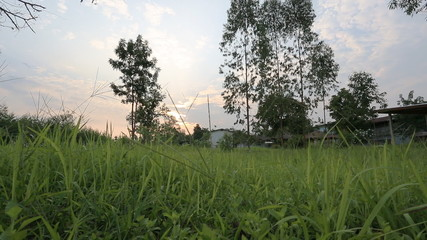 Evening scene of Thailand country - Tilt of dolly video