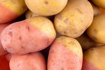 Fresh harvested potato tubers