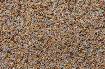 Extream close-up to the sand of coral  and shell flinders.