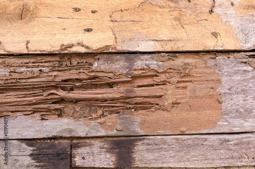 Tuinposter Hout Damage wood wall by termite