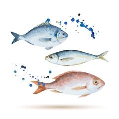 Watercolor fish.