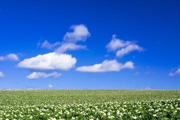 美幌町の田園風景