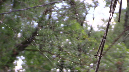 Spider web with lot of fly in it on nature background