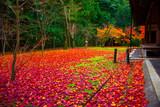京都 高桐院の庭園