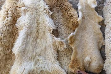 Sheep skins on sale in the village Lahij- Azerbaijan