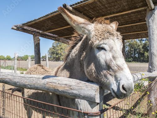 Poster Ezel Donkey on a farm