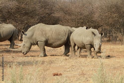 Tuinposter Neushoorn Nashorn, Namibia