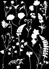 twenty two white isolated silhouettes of wild flowers