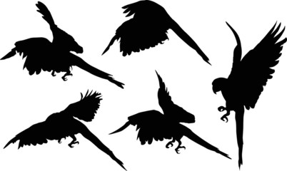 five black macaw silhouettes collection