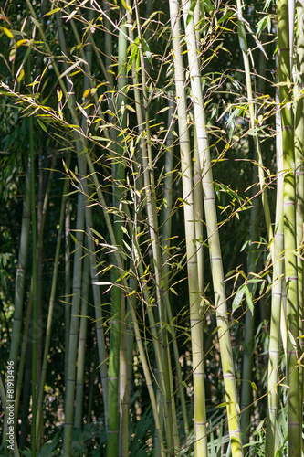 In de dag Bamboe green bamboo