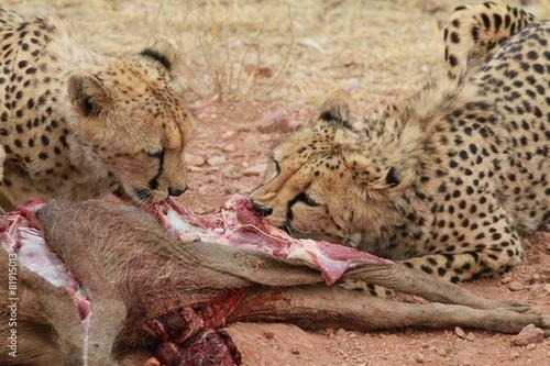 Fotobehang Luipaard Leopard, Namibia