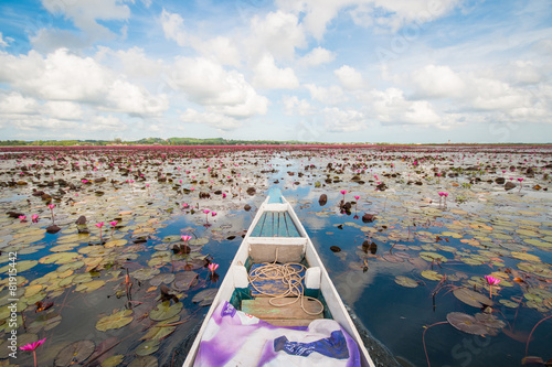 Canvas Meer pink lotus in lotus swamp at
