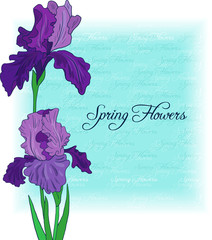 floral card with bouquet of irises