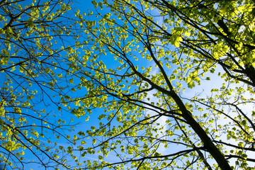 Frühling blauer Himmel