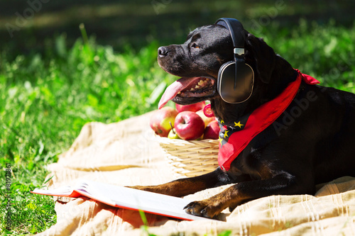Keuken foto achterwand Picknick Dog in headphones