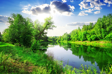 Green forest on river