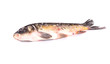 Leinwanddruck Bild - Raw fish.