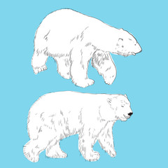 Set of linear drawing polar bears