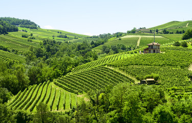 Summer landscape in Langhe (Italy)