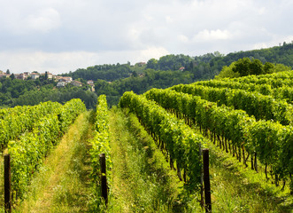 Summer landscape in Monferrato (Italy)