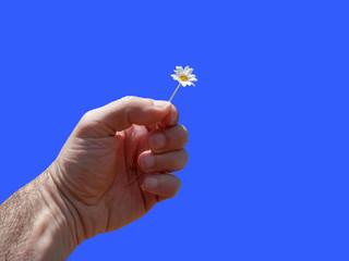 Mano, fiore