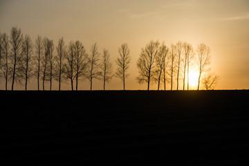 シラカバ並木と夕日