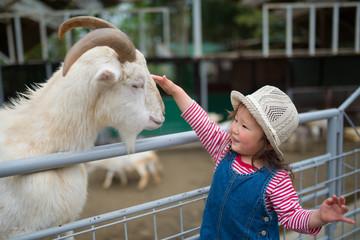 山羊を撫でる女の子