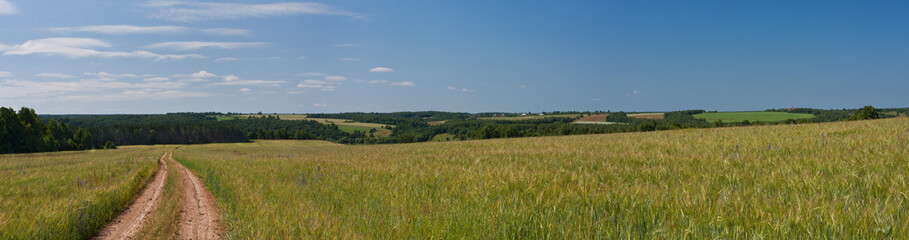Panorama summer landscape.