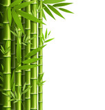 Fototapety Green bamboo grove isolated on white background
