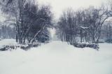 Winter landscape in a park