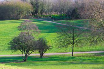 Beautiful park in spring